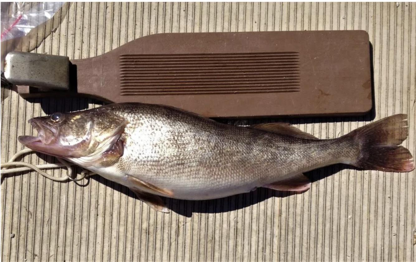 Georgia Fishing Report: October 1, 2021 — Georgia Wildlife Blog